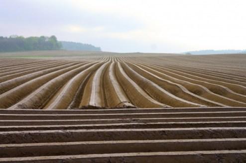 Öffnen für die Öffentlichkeit -PR in der Landwirtschaft